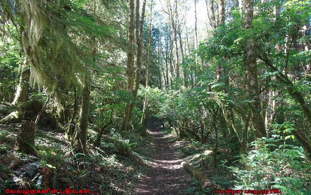 Neskowin Crest Research Natural Area Oregon