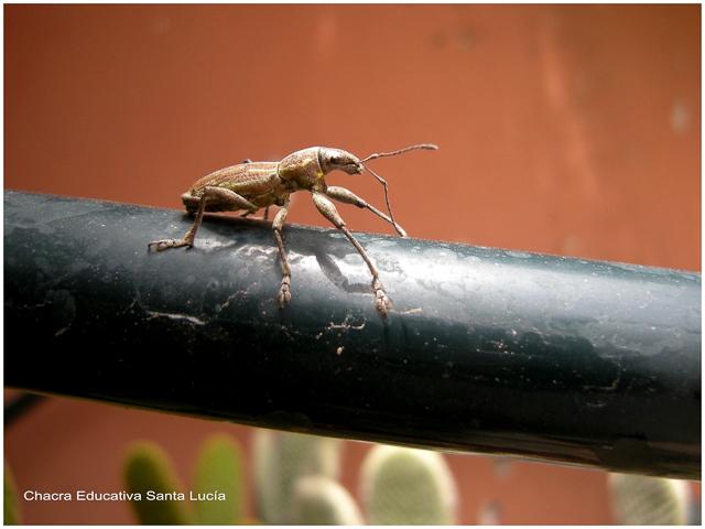 Insecto - Foto Marcos L para Chacra Educativa Santa Lucía