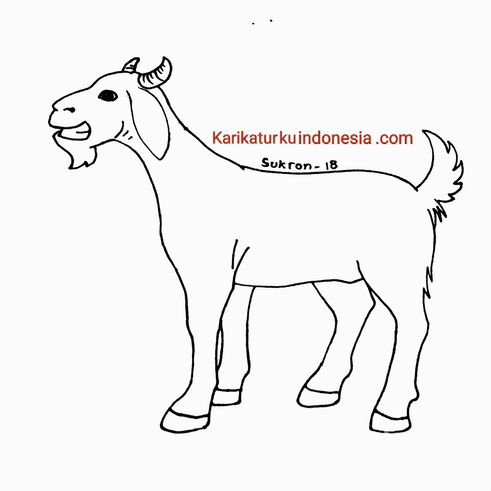 contoh gambar mewarnai binatang qurban