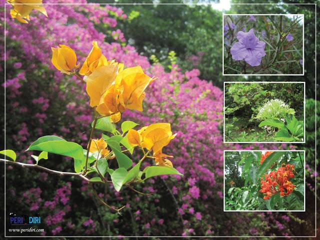 kumpulan bunga di kebun raya purwodadi