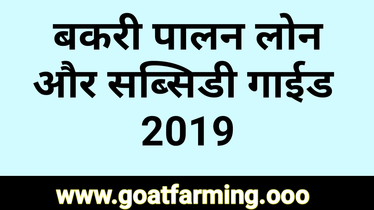 Goat Farming Loan and Subsidy Information 2019 - Goat Farming