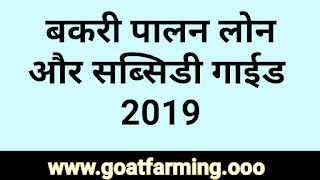Goat Farming Loan and Subsidy Information 2019