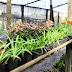 El Vivero Municipal intensifica la producción de plantines y especies ornamentales