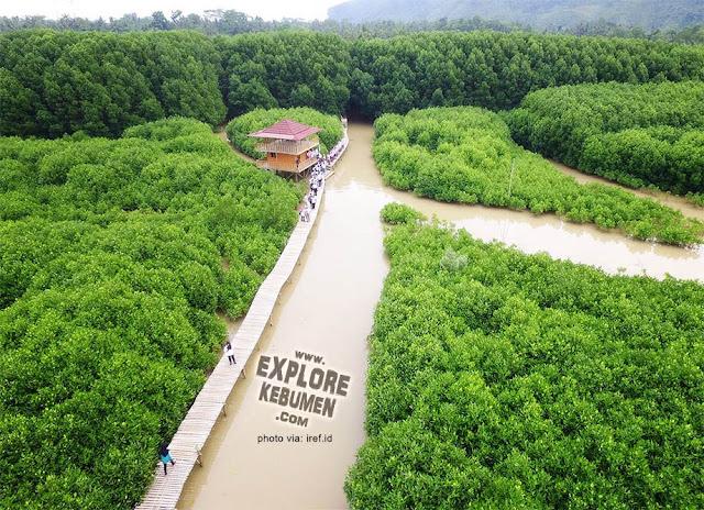 Hutan Mangrove Logending Ayah Gombong Kebumen