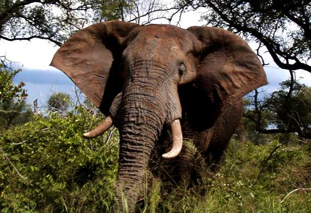 German tourist trampled to death by elephant in Zimbabwe