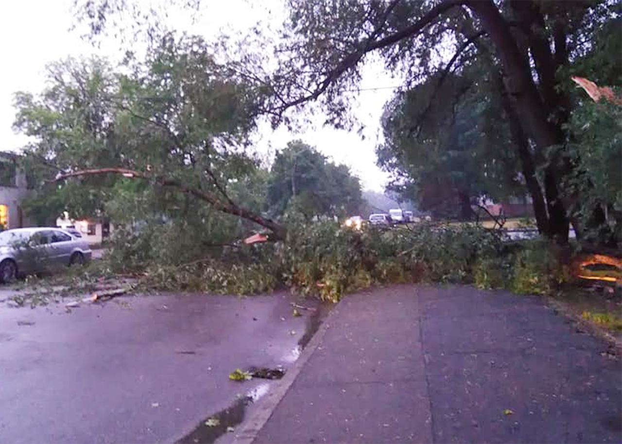 Vēja nogāzts koks Vecmīlgrāvī