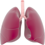lungs in spanish