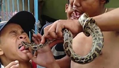 Bocah digigit ular piton