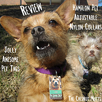 Hamilton Pet Collars and Jolly Awesome Pet Tags Review