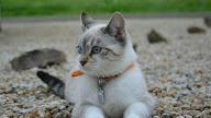 Referensi Nama Kucing Cowok 81021 Nama Untuk Kucing Comel Lucu Dan Unik