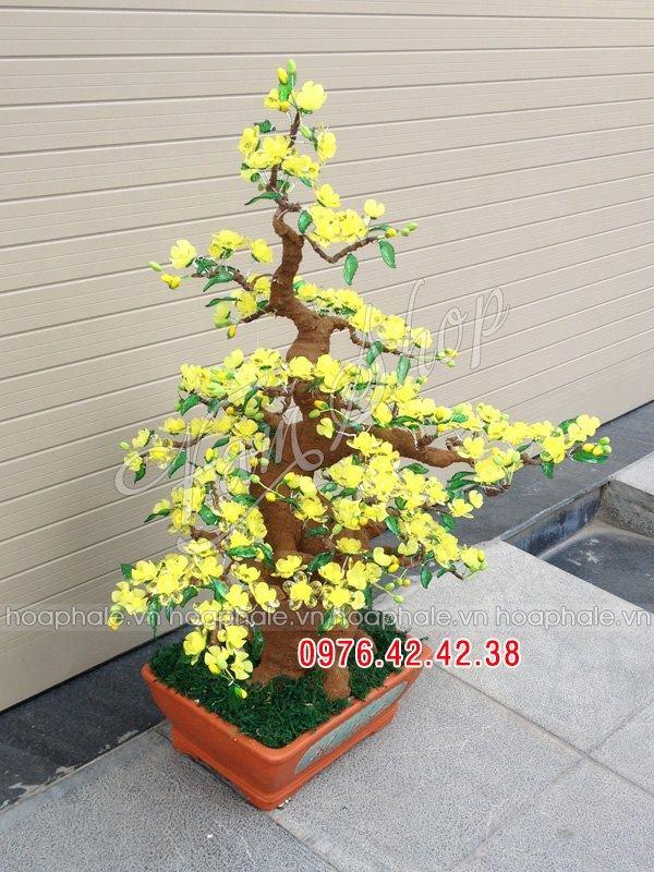 Goc bonsai mai dao cay hoa mai tai Dong Cac