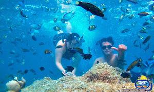 pulau macan open trip pulau harapan
