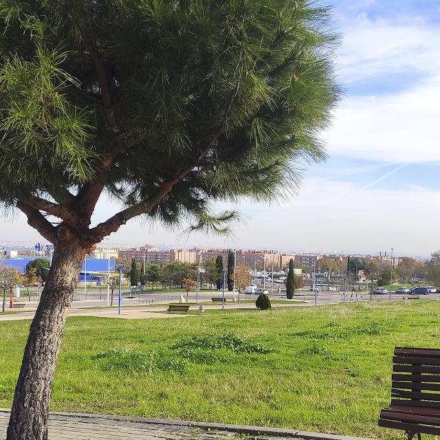Paisaje y un árbol