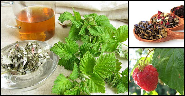 Raspberry Leaf Tea: An Herbal Remedy That May Protect Us Against Several Health Conditions