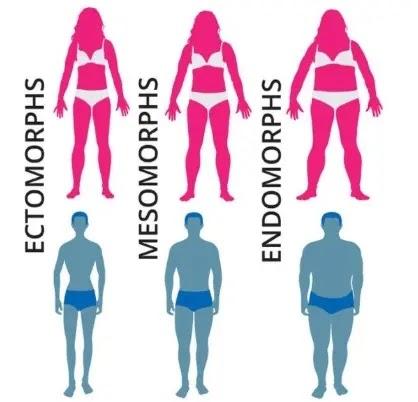 what morph body type am i?