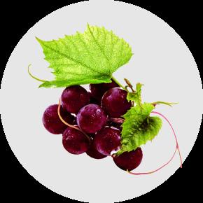 Ramuan Dalam ResV Shaklee - Hampas Anggur Dan Anggur Merah
