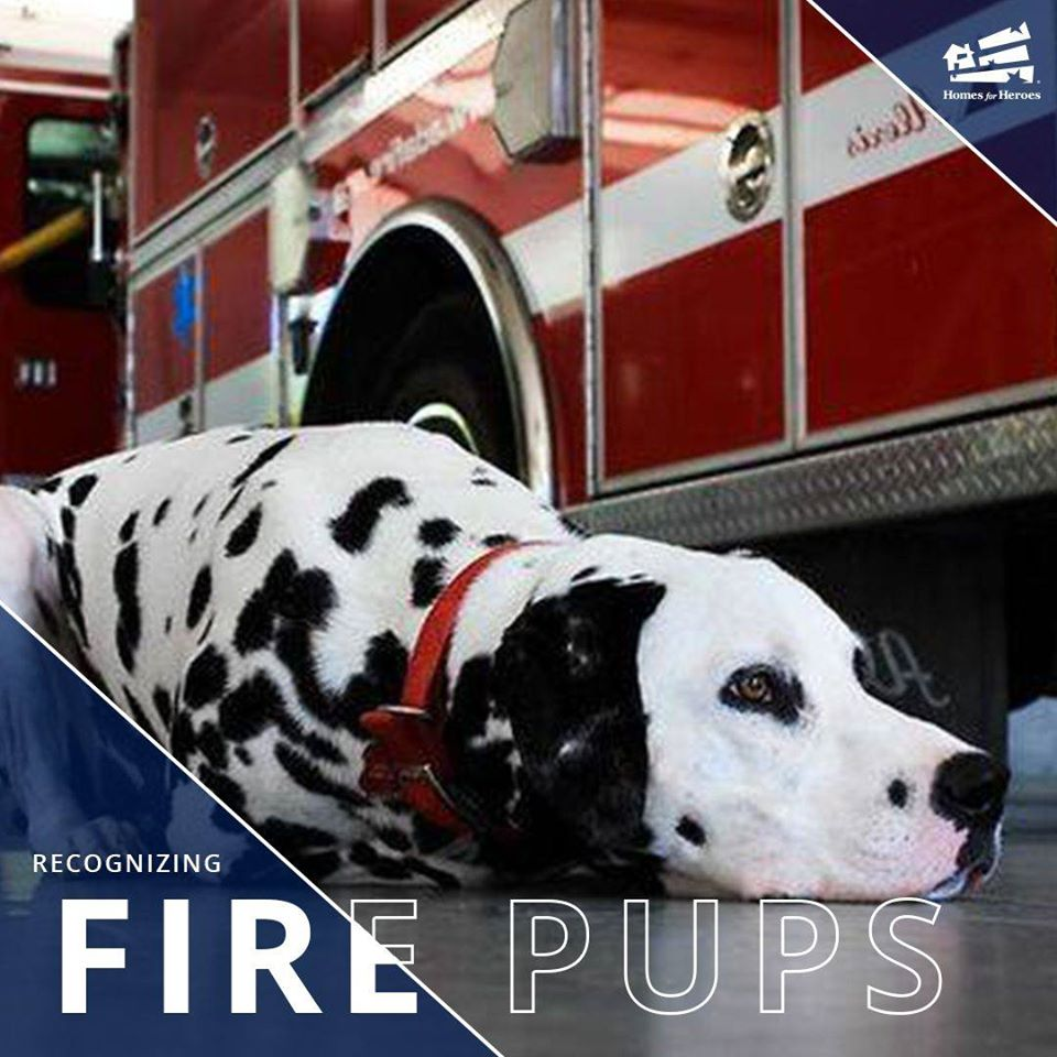 National Fire Pup Day Wishes Beautiful Image