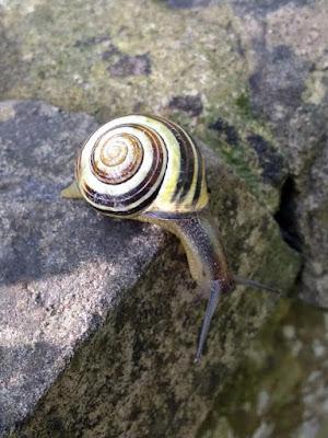 wildlife, snail,