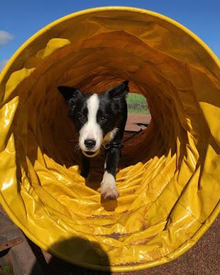 eduquer chiot chien annecy albertville thones ugine faverges