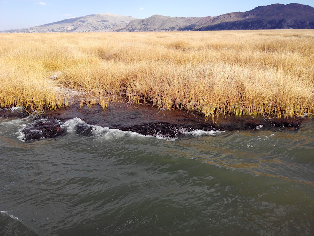 Raíces de totora en Lago Titicaca, Perú