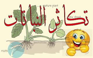 بحث حول تكاثر النباتات