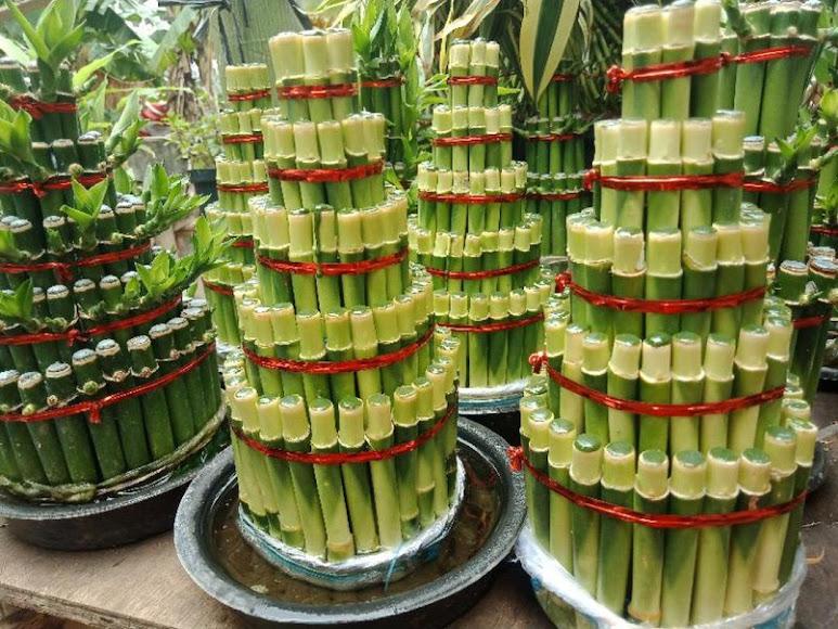 Bambu Hoki 5 susun pagoda susun 5 Sukabumi