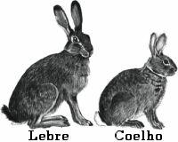 Coelhos e Lebres