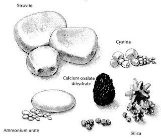 Urolithiasis Pada Hewan dan Penanganannya