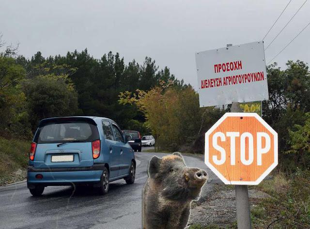 Θεσπρωτία: Αγριογούρουνα κυκλοφορούν ανενόχλητα στoν παλαιό δρόμο Ηγ/τσας-Ιωαννίνων και προκαλούν τροχαία ατυχήματα!