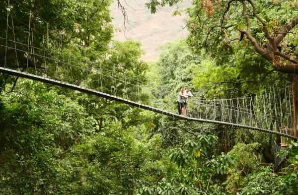 Treetop Walkway in Tanzania