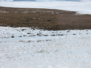 Photo of manure spread on field in winter.
