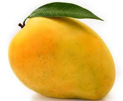 benefits of mango, आम खाने के फायदे