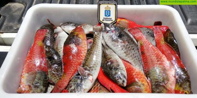 La Consejería coordina con la Guardia Civil y la Policía Canaria un protocolo para luchar contra la pesca furtiva