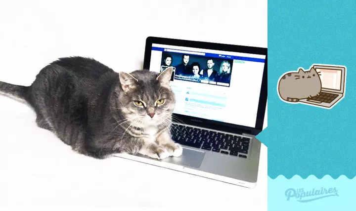 Momento awwn: Homem fotografa sua gata recriando stickers do Facebook