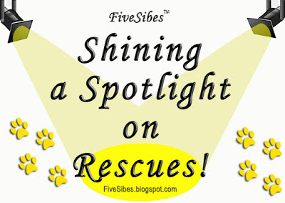 #WaitingWednesday Blog Hop #HuskyRescues