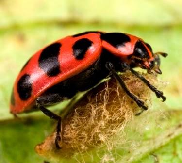Pengertian Simbiosis Parasitisme - Klik BBM Blog Pengertian
