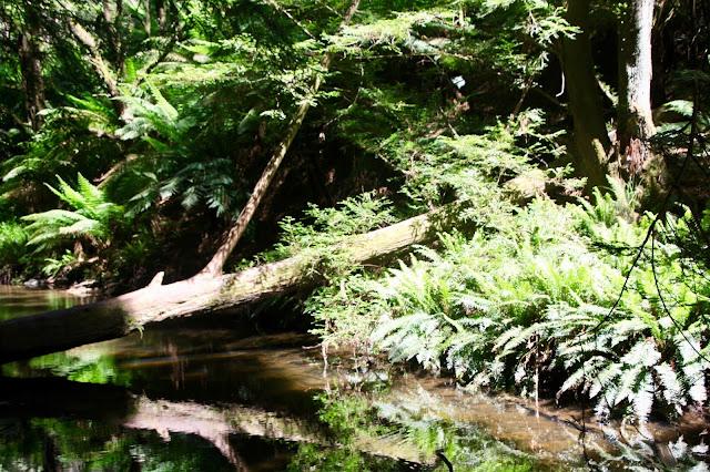 a creek by a forest