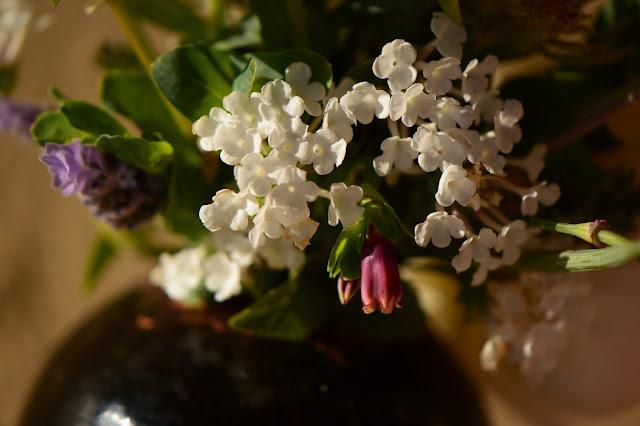 lantana, monday vase, small sunny garden, IaVoM, cottage garden, amy myers, desert garden