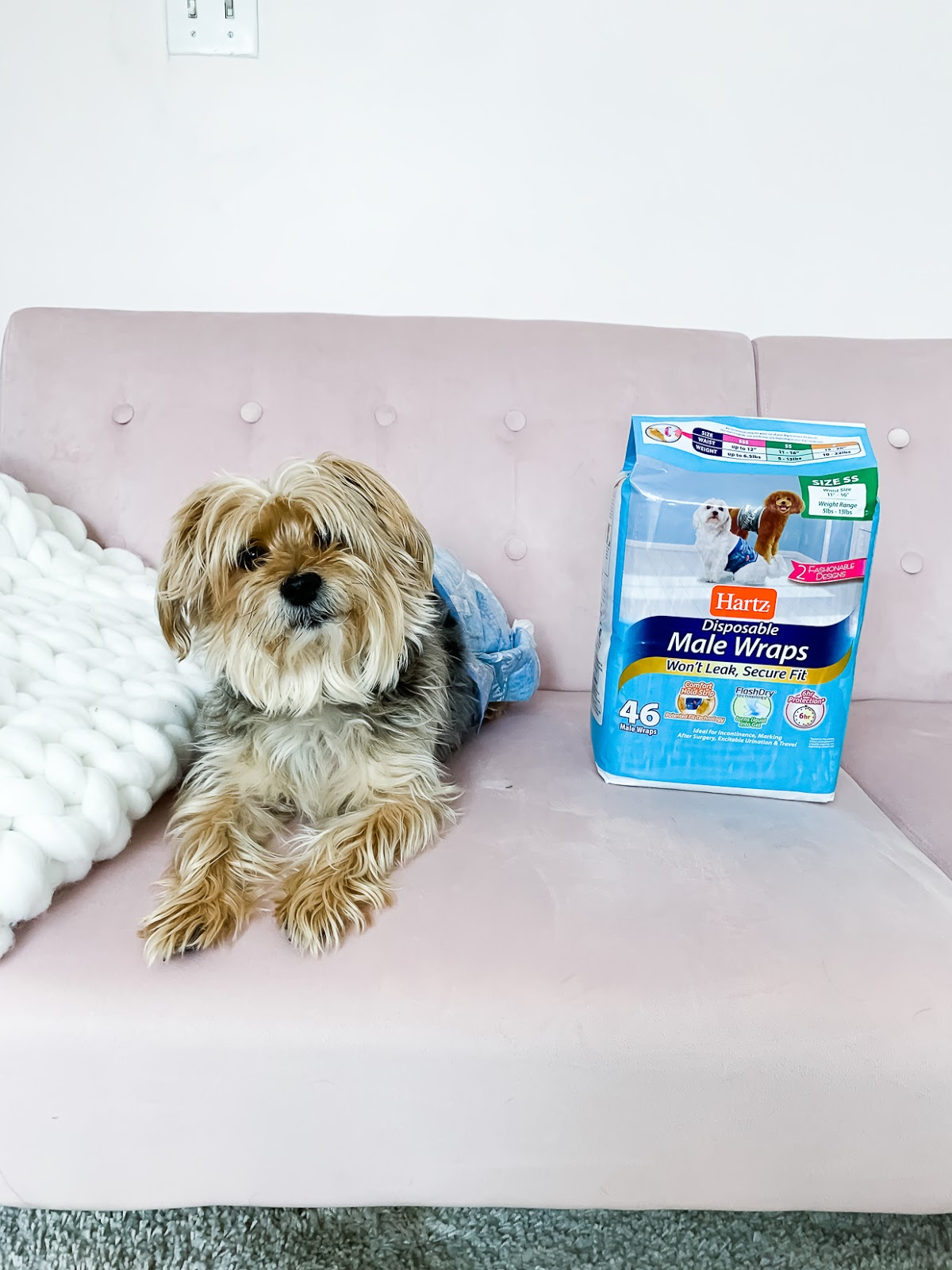 How To Prevent Your Dog From Peeing In The House - Chasing Cinderella