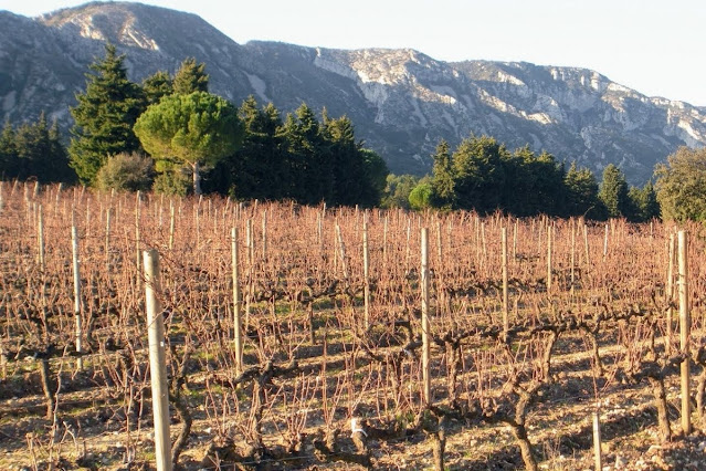 Christmas in Provence: vineyard