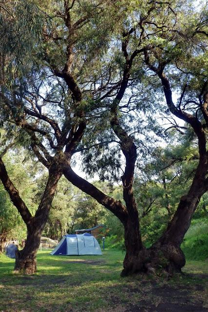 Prevelly, Caravan Park, Bäume, Campingplatz, Zelt, campieren
