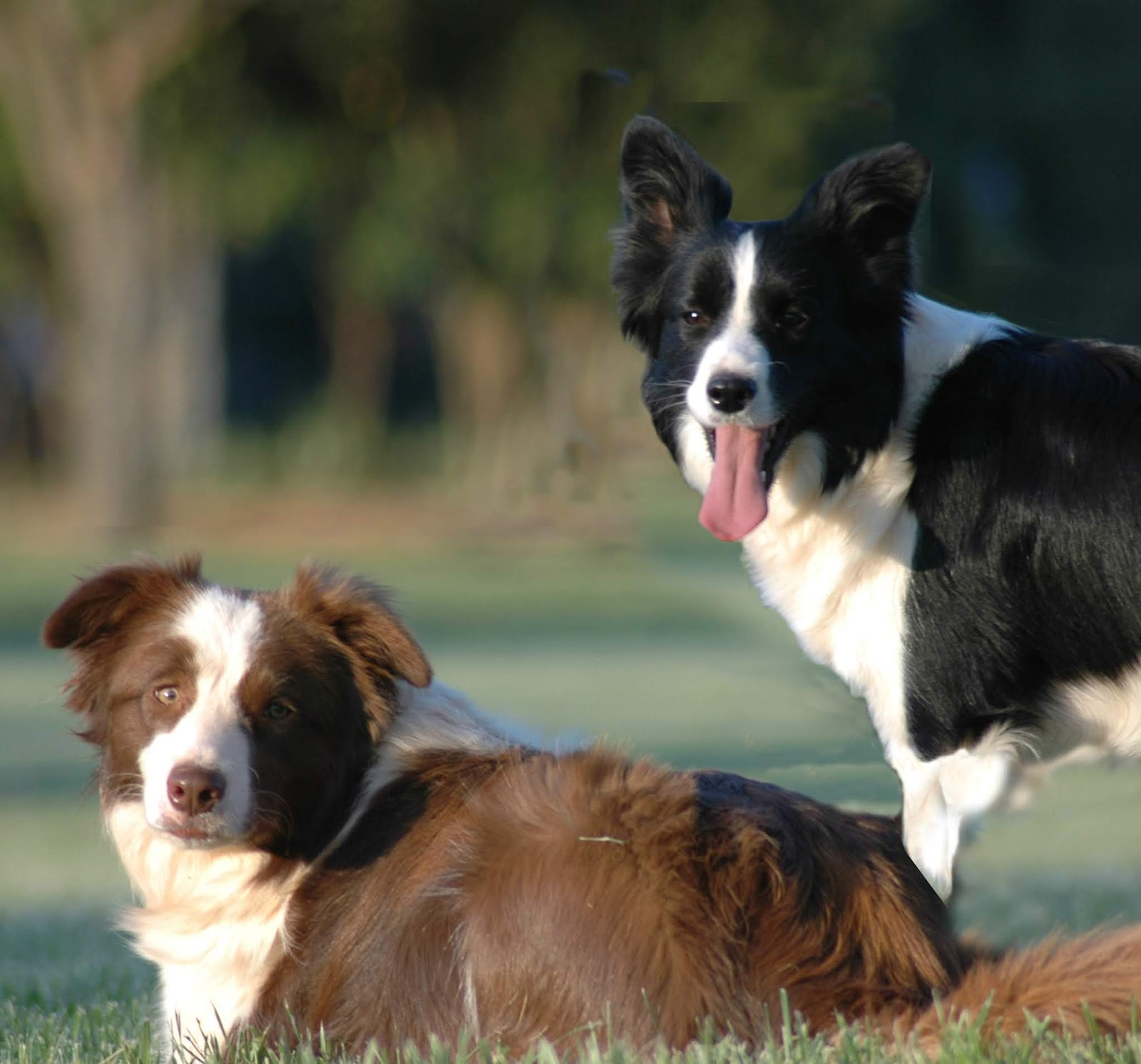 The Modern Bark | Dog Training Tips: 99 Names for Female