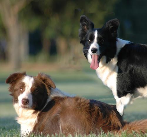 99 Names for Female Border Collies | Scottish, Irish and Welsh Dog