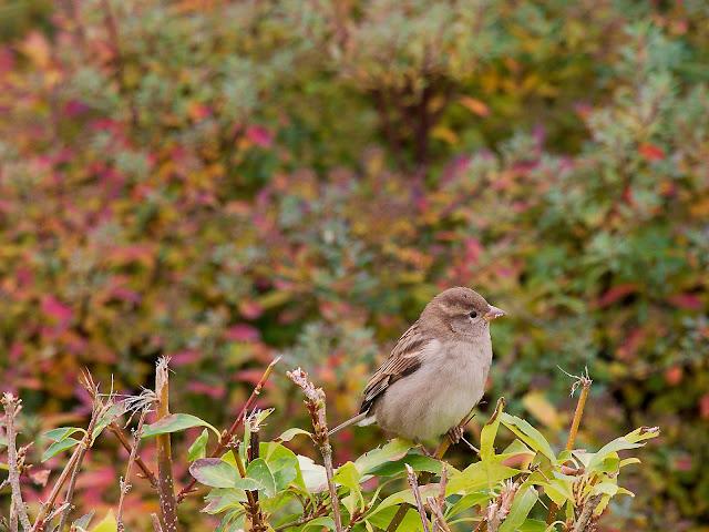 Die benachbarten Hecken geben Deckung für die Vögel
