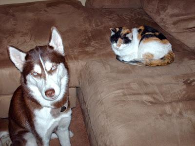 dog training, training tips, Teach dogs the Leave It command, Teach your dog, Dog training