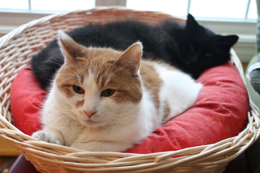 30 cutest photos of cats in baskets best photography art landscapes and animal photography. Black Bedroom Furniture Sets. Home Design Ideas