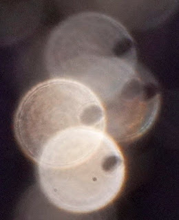 paranormal semicircles