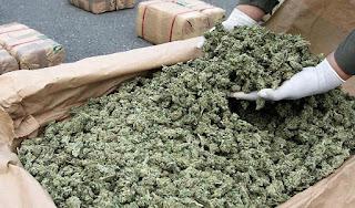 Marijuana business accounting