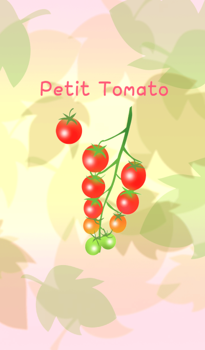 Petit * Tomato