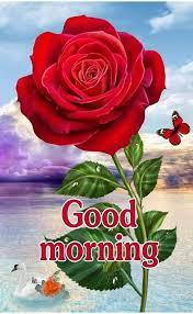 Good Morning photos WhatsApp message gm photos